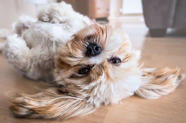 פרקט ובעלי חיים - האם זה הולך יחד?